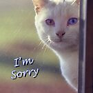 White Cat  I'm Sorry Card by © Joe  Beasley IPA