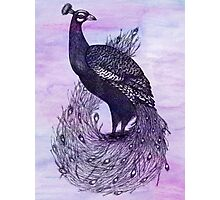 Long Tailed Peacock with watercolour background Photographic Print