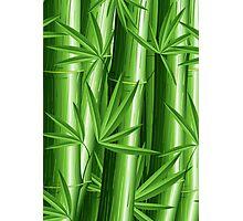 Bamboo Jungle Zen Photographic Print