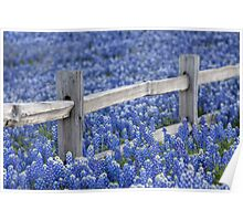 Texas Bluebonnets and an old Wooden Fence Poster
