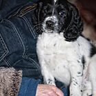 Charlie at 8 Weeks by Paul Morris