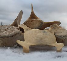 Whale bones on snow by Porridgewog32