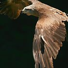 Golden Eagle by miradorpictures