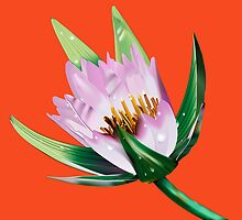 American Lotus Vector Image by Paul Wolf