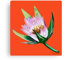 American Lotus Vector Image Canvas Print