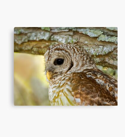 Barred Owl Profile Canvas Print