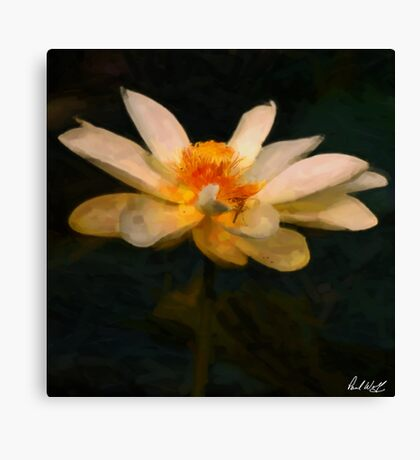 Lotus Flower Oil Canvas Print