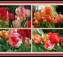 Parrot Tulips in Springtime Philadelphia by MotherNature