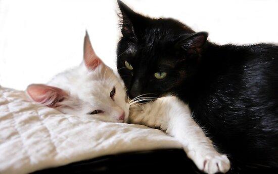 Black & White Duet  by heatherfriedman