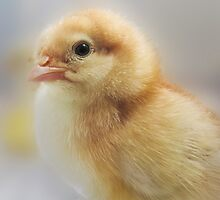 Baby Easter Chick by Neelrad