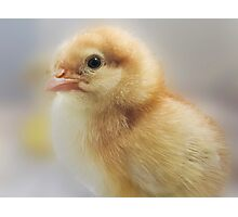 Baby Easter Chick Photographic Print