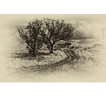The Journey (Sepia) - Cootamundra,NSW - The HDR Experience Photographic Print