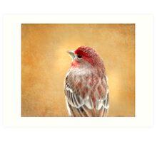 House Finch #1 Art Print