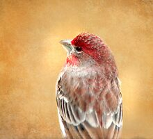 House Finch #1 by Eileen McVey