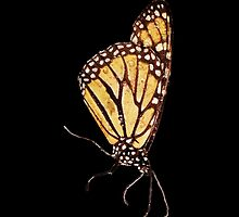 Monarch Butterfly Print On Black by DreamByDay