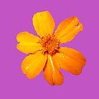 Orange Yellow Flower Print On Purple by DreamByDay