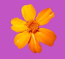 Orange Yellow Flower Print On Purple by DreamByDay