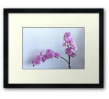 Fine branch of a blossoming pink orchid Framed Print