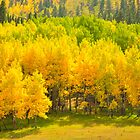 Aspen Forest by Reese Ferrier