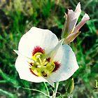 Mariposa Lily by jkgiarratano