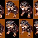 Rottweiler Puppy Isolated On Black and Tan Tile Pattern by taiche