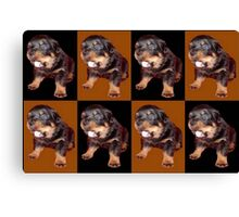 Rottweiler Puppy Isolated On Black and Tan Tile Pattern Canvas Print