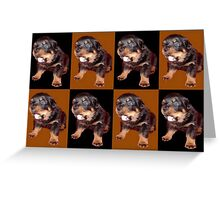 Rottweiler Puppy Isolated On Black and Tan Tile Pattern Greeting Card