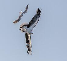 Sea Eagle & Sea Gull  1 by John Van-Den-Broeke