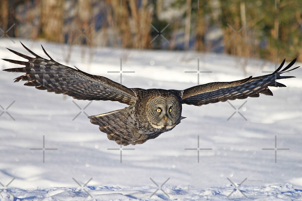 I will soar to new heights by Heather King