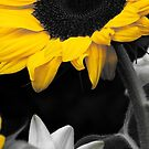 Sunflower by AlisonOneL