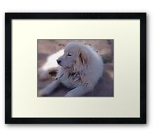 Ivan the Great Pyrenees Framed Print