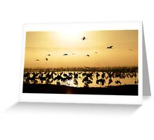 Common crane (Grus grus) Silhouetted at dawn Greeting Card