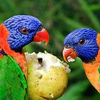 Two Rainbow Lorikeets Share A Pear. by Nick Egglington