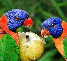 Two Rainbow Lorikeets Share A Pear. by Nicholas Griffin