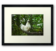 White Silkie Rooster VRS2 Framed Print