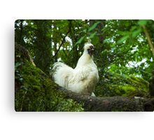 White Silkie Rooster Canvas Print