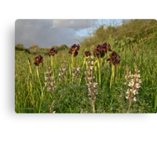 Irises at Nature Canvas Print