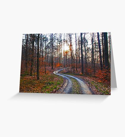 Silver Path in the Woods VRS2 Greeting Card