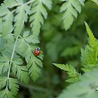 ladybirds by Tom Windsor