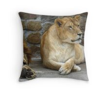 Lion and a lioness have a rest Throw Pillow