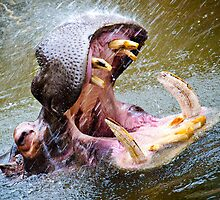 Happy Hippo. by Nick Egglington