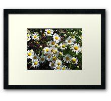 white camomiles Framed Print