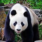 Portrait Of A Giant Panda. by Nick Egglington