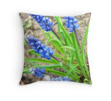 Some beautiful blue flowers of muscari Throw Pillow