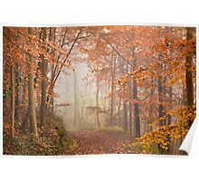 Mystic Woods Poster