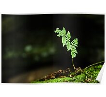 Pinnate - Cuyahoga Valley National Park, Ohio Poster