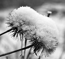 Snowy seed heads by Lorna81