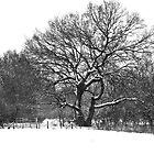 Snowy tree by Lorna81