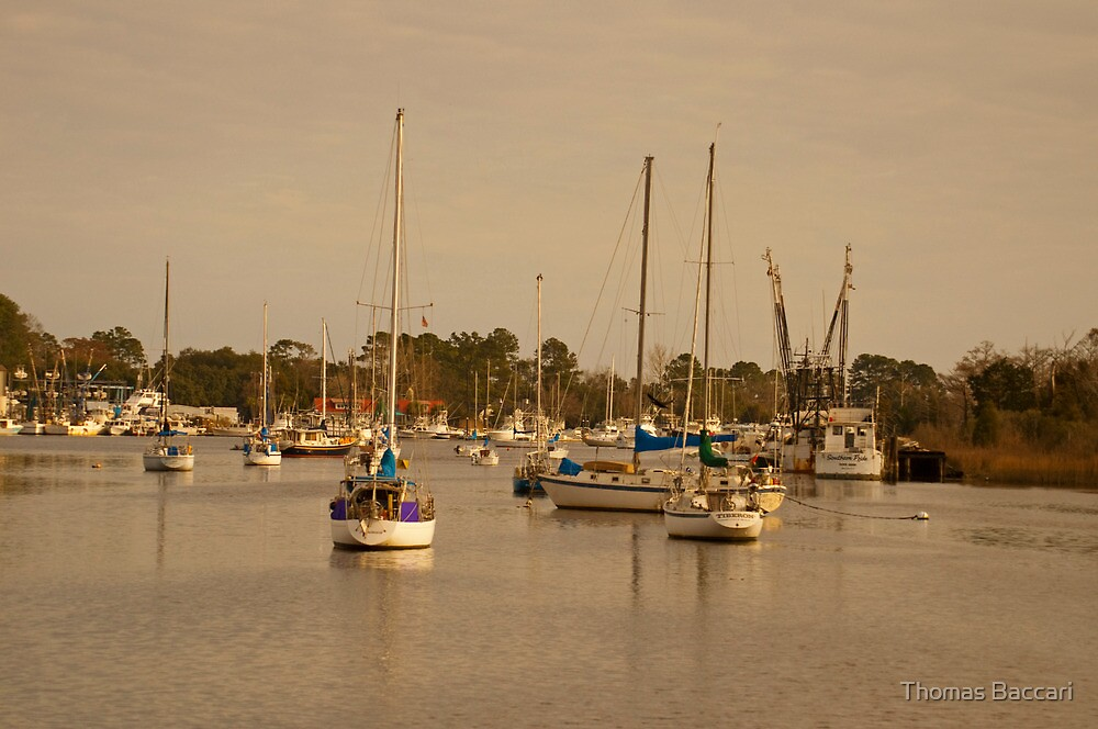 SAILBOATS IN THE BAY by TJ Baccari Photography