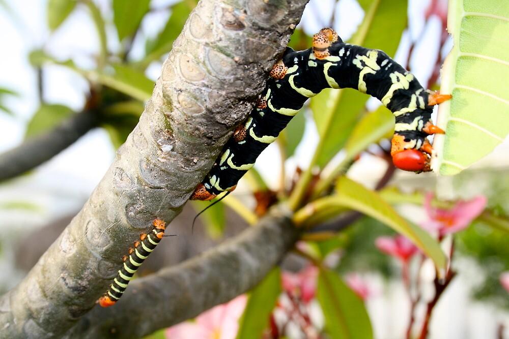 Caterpillar plant 2 by Lorna81
